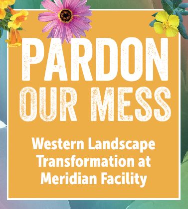Meridian Landscape Renovation 2019